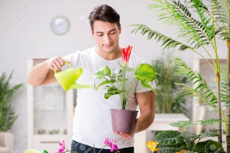 natural-plant