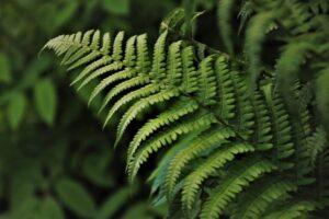 wedding-motif-tux green, ferns, flora